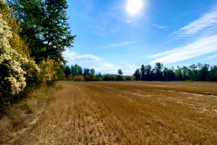 6-acre secluded parcel