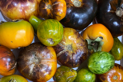 Tomato and persimmon medley